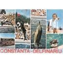 CARTE POSTALA-ILUSTRATA COLOR  NECIRCULATA CONSTANTA DELFINARIU